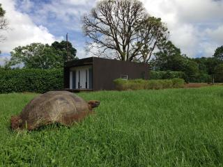 Giant Tortoises in garden of the house. MonteMar, Puerto Ayora