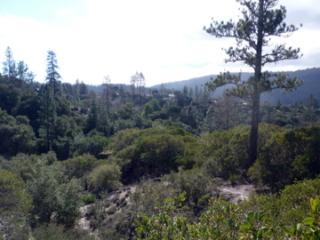 Private Meadow,  Hottub. Nature Preserve, Birdsong, Santa Cruz