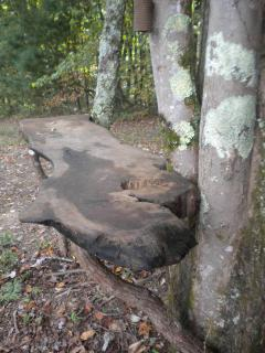 Burl outdoor tables built into the trees
