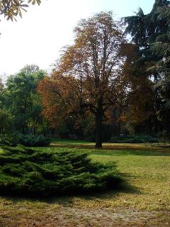 the Public Park with centuries-old horse chestnut tree