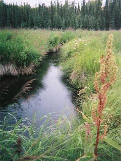 Soldotna Creek flows through the meadow below the chalet in the background.