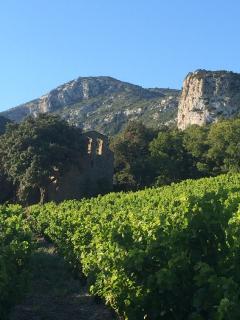 Local walk / sightseeing - around 20mins walk through vineyards country lanes