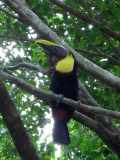 Tucan visitor