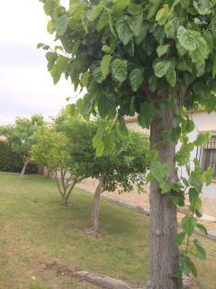 jardin trasero con arboles frutales