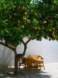 Help yourself to lemons .... lemonade .... gin and tonic anyone?