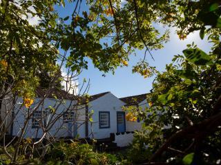 Glicinias do Pico, Purple House