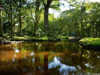 Homelands, Brockenhurst, The New Forest.