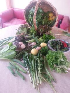 Some vegetables from our kitchen garden