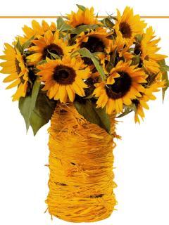 Sonnenblumen - sun flowers