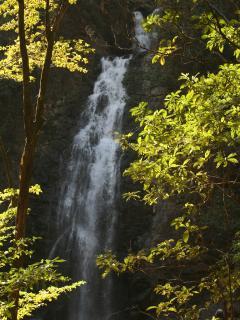 Montezuma falls.