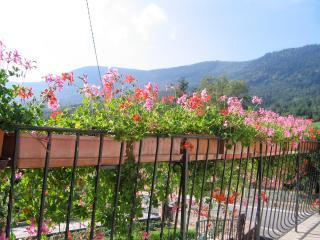 gîtes les Floralies, Selestat