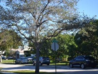 Conveniently located, Fully Furnished House, Deck, Fort Lauderdale