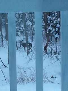 deers right outside our window