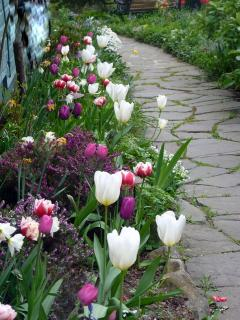 Side pathway in spring.