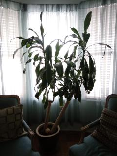 House plant in living room