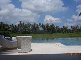 swimming pool and rice field view