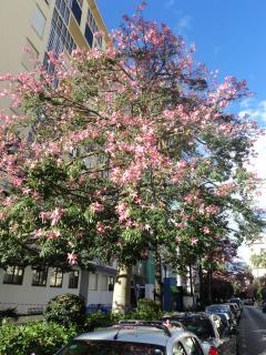 Winter flowering tree outside  the back entrance