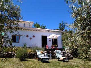 The sun terrace, barbeque area