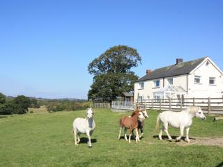 Secluded Cottage in the heart of Welsh Cob Country, Llanddewi Brefi