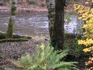 Hidden Duc Cabin, on the Sol Duc River