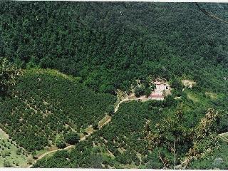 Grande, lussuoso, appartamento, nel bosco, Belmonte in Sabina