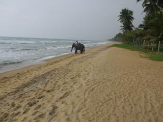 Beach Villa, Wadduwa, Western Province, Sri Lanka