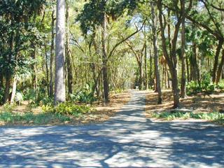 Shady, paved path to the beach
