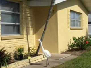 Great Egret and front of House - 2 bedroom unit