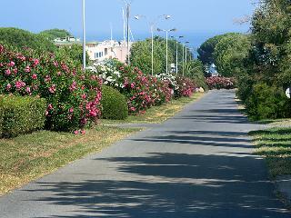 les Oiseaux - INH 32182, Cavalaire-Sur-Mer