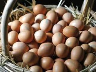 As galinhas de meus ovos