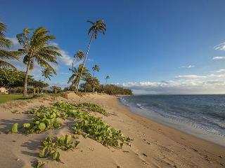 Maui Sunset  A204 1Bd 1 Ba Oceanfront Property. Great Rates!! Sleeps 5, Kihei
