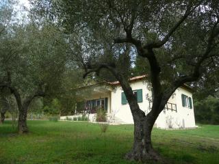 house - olive yard