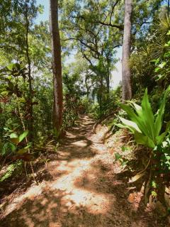 Nearly 1km of bush tracks throughout the property