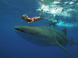 swimming with whale sharks top tourist spot also not so far