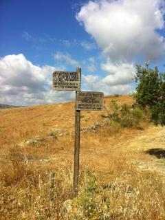 Freedom to walk the andalucian countrside....