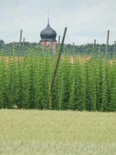 Neighbourhood [ walking through the hop fields at the rear of our holiday home ]