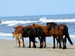 OCEANSIDE, EXCELLENT LIGHTHOUSE VIEWS, SLEEP 24, POOL, SPA, KAYAK, WLD HORSES!