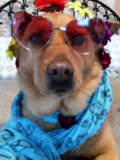 Meet Miss Helen - our very cool Hip Little Stay mascot - she even has her own page!