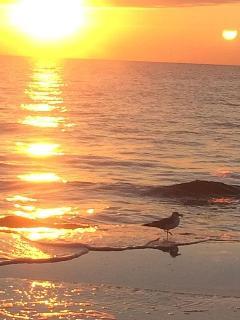 Always Amazing Sunsets