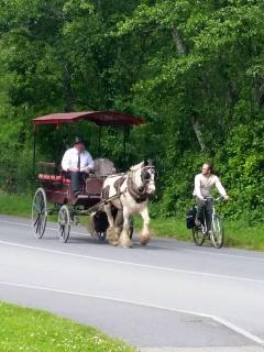 Cycle or take a Jaunting car. A wonderful way to see Killarney National Park.