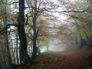 Apto. de Montaña en Felechosa (Asturias)