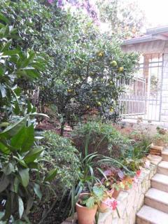 mandarin in park of the villa