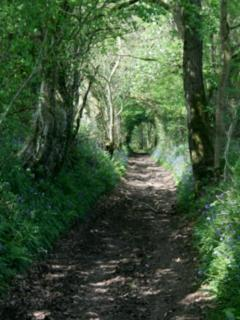 A hidden lane.