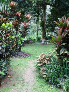 the side garden, lime trees, papaya, tropical flowers and the river is beyond