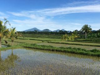 Ubud Rice Field Villa, Private Retreat With Views