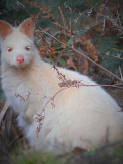 You might even spot a rare albino white wallaby