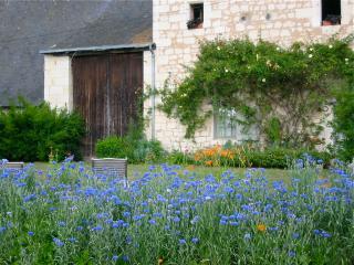 Maison LR east side garden