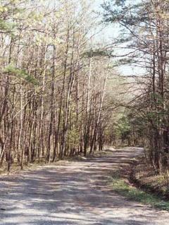 Nestled Pines Chalet