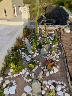 Even the small lovely cactus garden is waiting your care