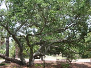 Lovely Live Oak tree in the front.